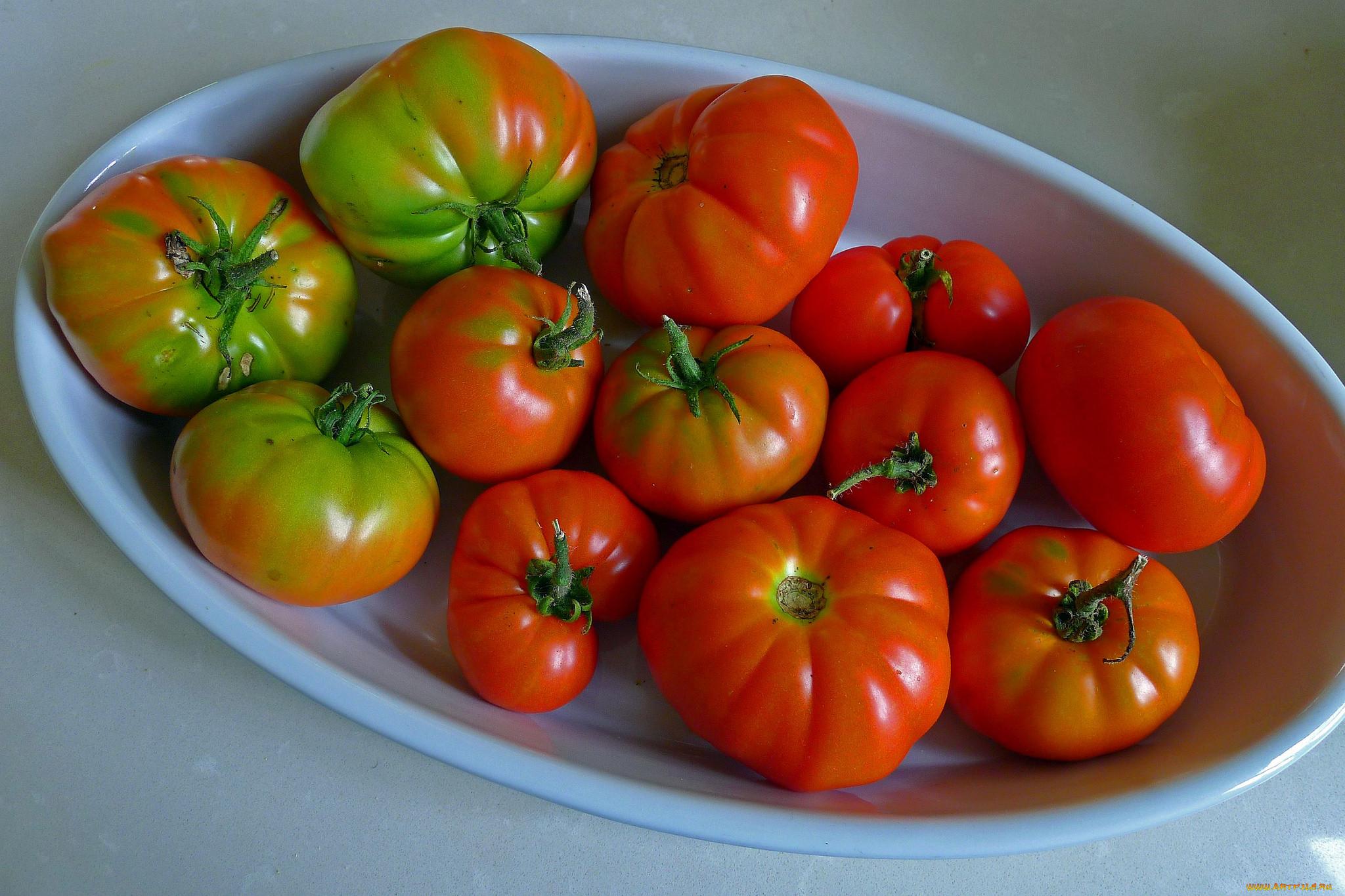 картинки помидоров растение для рабочего стола кругу